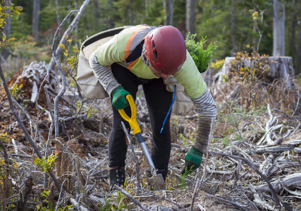 Tree planting is a very physically demanding activity and reducing the potential for injury or disease is paramount.